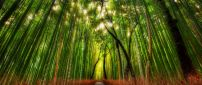 Green and red bamboo forest in the sunlight