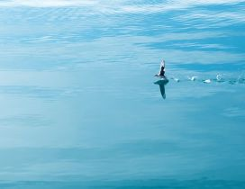 A sweet bird running on the blue water
