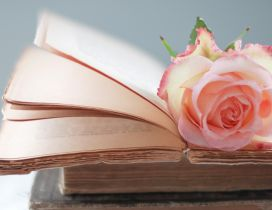 Pink rose on the book tabs - Romantic image