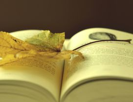 A yellowed leaf on the opened book