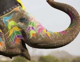 A painted elephant - Animal festival