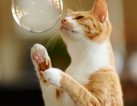 A sweet yellow cat playing with a white bubble