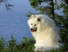 A dog with fluffy white fur on the shore of water