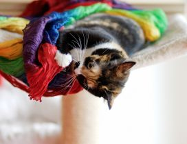 A sweet cat plays with a colored material