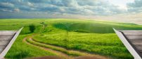 A path through the green grass - A green field in the book