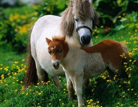 A big white horse and a foal in the grass