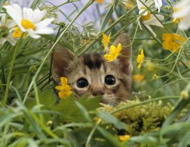 Sweet kitty hiding in the green grass