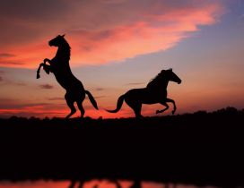 Two horses in the shade in sunset