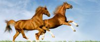 Two amazing horses running on the green field