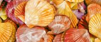 Colorful shells in a painting - Shells texture