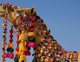Decorated camel with many colors