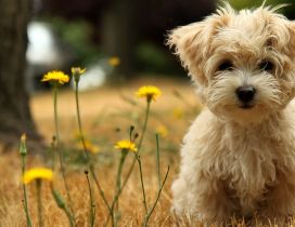 A sweet fluffy puppy between yellow flowers