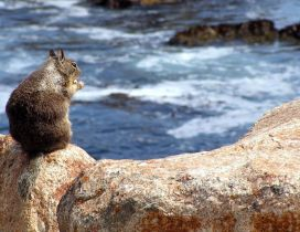 A squirrel on rocks on the shore of water
