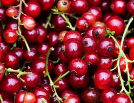 Many red currant - HD fruits wallpaper