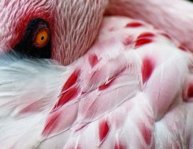 White and red flamingo bird