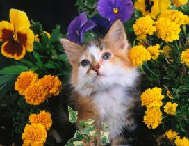 Sweet cat between flowers in a garden