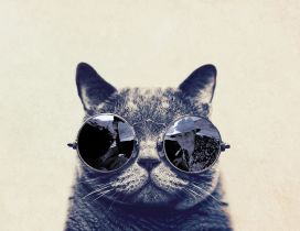 Fashion cat with sunglasses - HD funny wallpaper