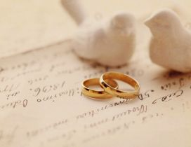 Two white birds and two wedding rings - Love time