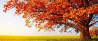 Big tree in the middle of autumn season - HD wallpaper