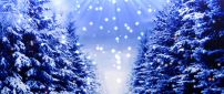 Blue christmas trees full with white snow