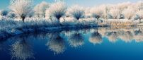 Frozen trees on the edge of the lake - beautiful mirror