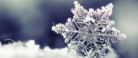 Beautiful crystal snowflake - macro HD wallpaper