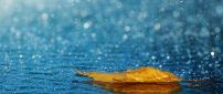 Autumn leaf in the rain - Beautiful HD wallpaper