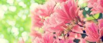 Beautiful pink spring flowers - HD nature wallpaper