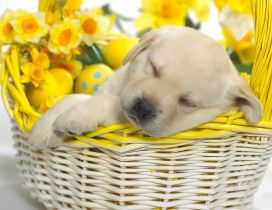 Beautiful sweet puppy sleeping in a basket with flowers
