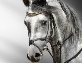 Wonderful horse - professional photo with animals
