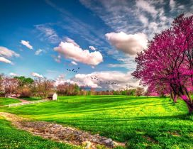 Landscape beautiful spring nature - HD wallpaper