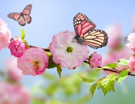 Pink butterfly on the blossom trees - HD wallpaper