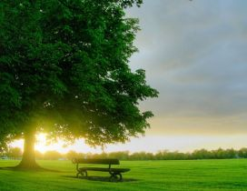 Beautiful sunrise on the green grass in the park