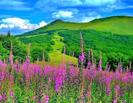 Wonderful spring colours in the nature-flowers and mountains