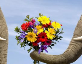 Pure animal love - two elephants and a bouquet of flowers
