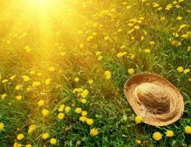 Summer hat on a field full with dandelions