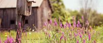 Flowers in front of a wooden old house