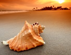 Big shell on the sand in the sunset - HD wallpaper