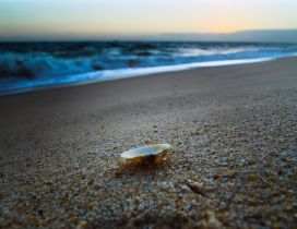 One little shell in the sand - holiday at the beach