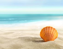 Orange shell in the sand - summer holiday at the beach