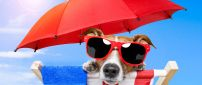 Hot summer days at the beach - funny dog with sunglasses