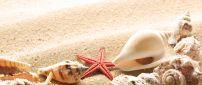 Shells on the golden sand from the beach - HD wallpaper