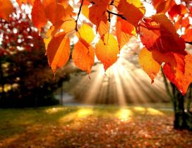 Autumn sunrise - wonderful season moments