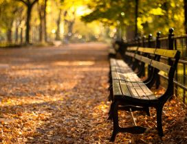 Relaxing time on a bench in the park - Autumn season