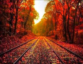 Autumn leaves on the rails - HD wonderful wallpaper