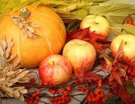 Delicious and sweet apples and pumpkins  - Autumn harvest