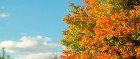 Autumn tree in a sunny cold day  - HD wallpaper