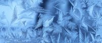 Frozen winter leaves - HD wallpaper