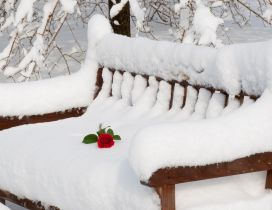 Red rose on a bench full with snow in the park
