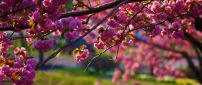 Blossom tree - Spring season is here